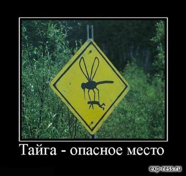 Тайга - опасное место