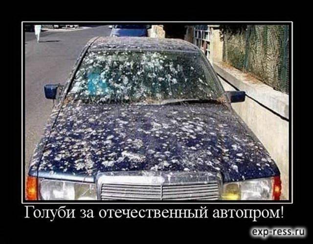 Голуби за отечественный автопром!